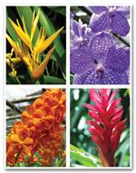 LR3254 Health Care Reminder Cards Orchid Laser Postcards 8 1/2 x 11
