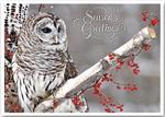 HP13311 - N3311 Winter Owl Holiday Cards 7 7/8 x 5 5/8