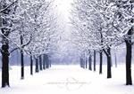 C1158 Winter's Path Christmas Card 7 7/8 x 5 5/8
