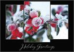 H08613 Morning Frost Holiday Cards 7 7/8