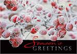 H09618 Sugar Berries Holiday Cards 7 7/8 x 5 5/8